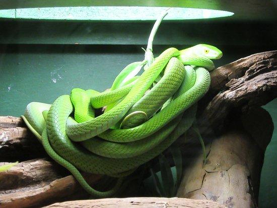 Lawnwood Snake Park
