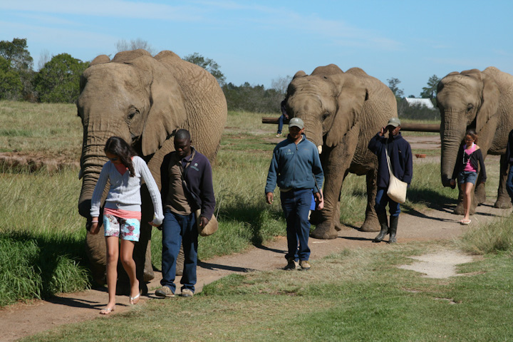 The Crags Elephant Sanctuary
