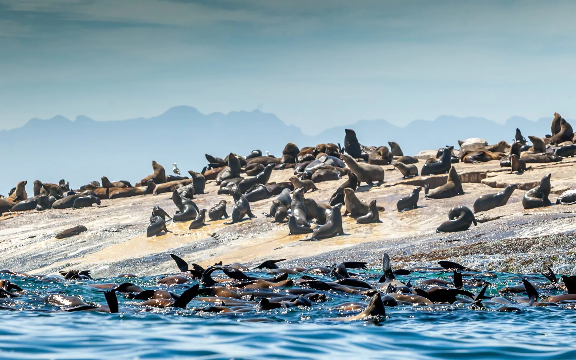 seal island mossel bay